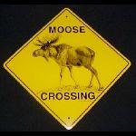 MooseCrossing